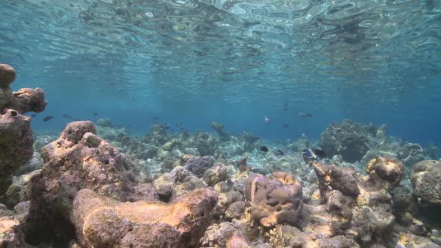 dappled light over vaavu atoll, the maldives - dappled light stock videos and b-roll footage
