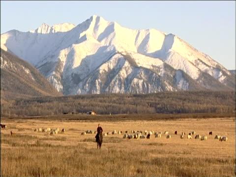 darhad tribesman herds cattle on horseback snow covered mountains in background darhad valley mongolia - przewalskihäst bildbanksvideor och videomaterial från bakom kulisserna