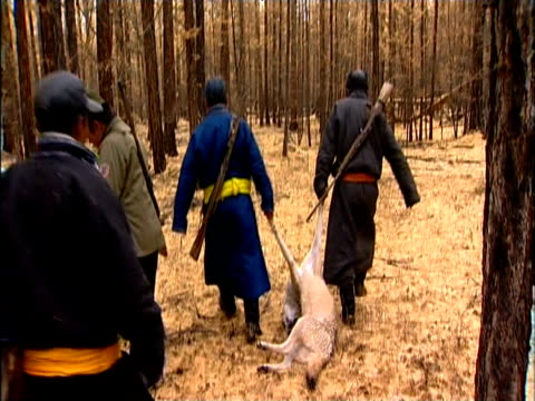 Darhad tribesmen drag dead wolf through woods and mount horses as they return from hunt Darhad Valley Mongolia