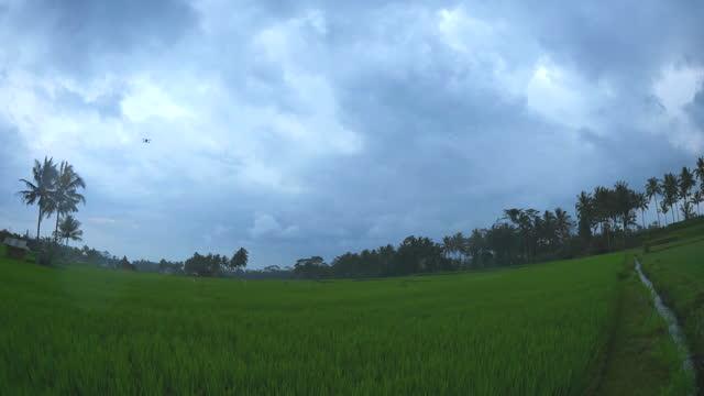 dark clouds above farmland in ubud district / bali, indonesia - ubud district stock videos & royalty-free footage