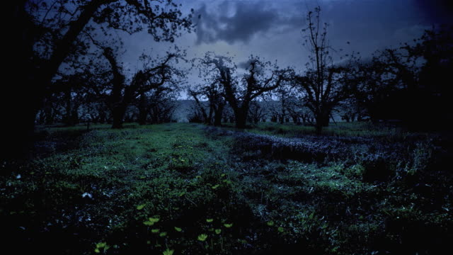 t/l ws ts dark clouds moving above field of apple trees in orchard / oregon, usa - ominous stock videos & royalty-free footage