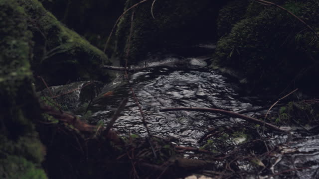 Donker bos creek in slow motion