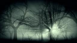 Dark forest in mist