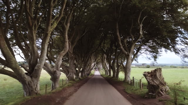 vídeos de stock e filmes b-roll de dark hedges in northern ireland on a gloomy afternoon - 4k - irlanda