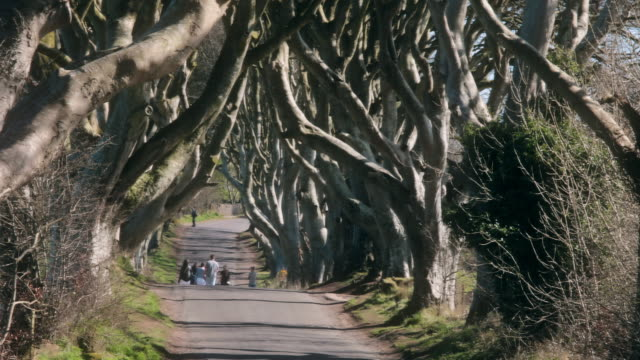dark hedges of northern ireland - northern ireland stock videos & royalty-free footage