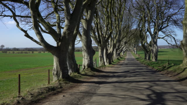 dark hedges of northern ireland - dark stock videos & royalty-free footage