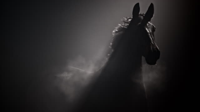 slo mo ts dark horse running in misty night - black colour stock videos & royalty-free footage