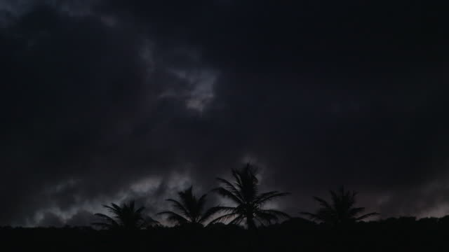 dark moody sky with silhouetted palm trees - tropical storm stock videos & royalty-free footage
