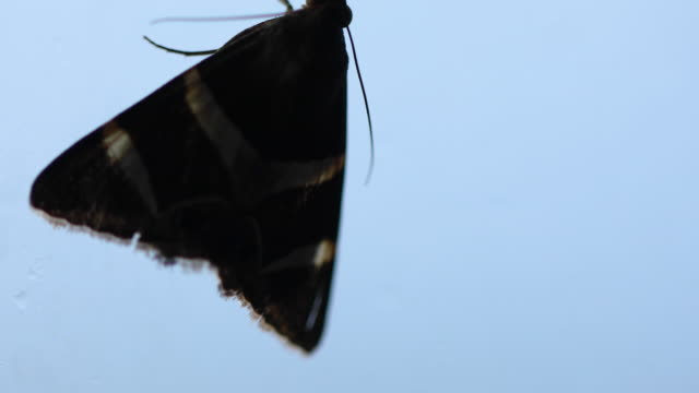 dark moth on a glass window - moth stock videos and b-roll footage