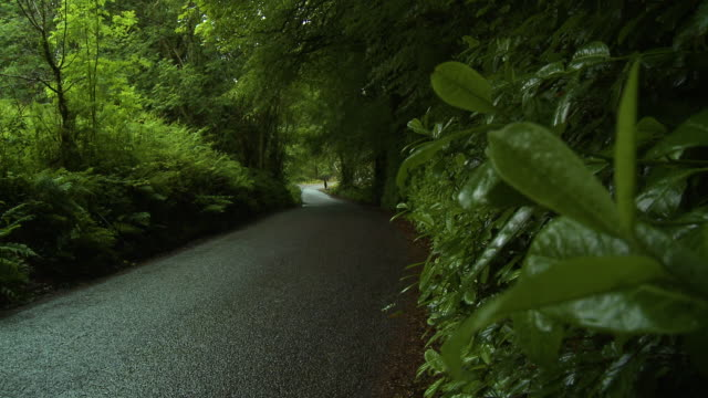 a dark, narrow road through a lush forest - narrow stock videos & royalty-free footage