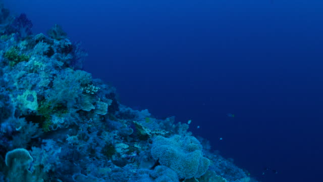 Dark sea, coral reef