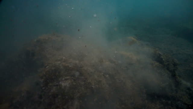 dark seabed. underwater particles of dust and water. agitated and dusty seabed. particles in movement. - fondale marino video stock e b–roll