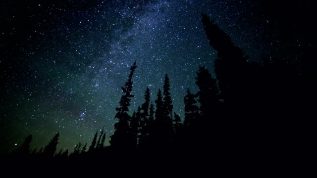 Dark silhouette of fir and pine tree forest against milky way starry night sky from Elk Meadow Mt. Hood