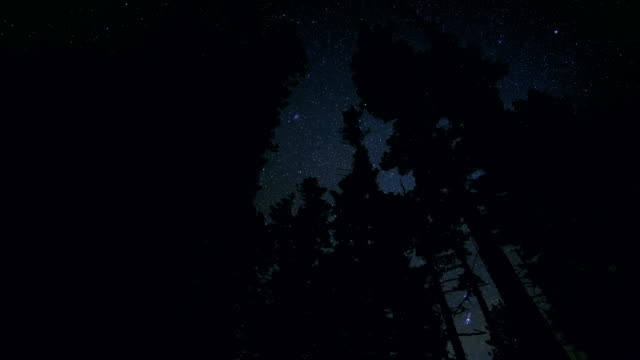 Dark silhouette of fir and pine tree forest against starry night sky