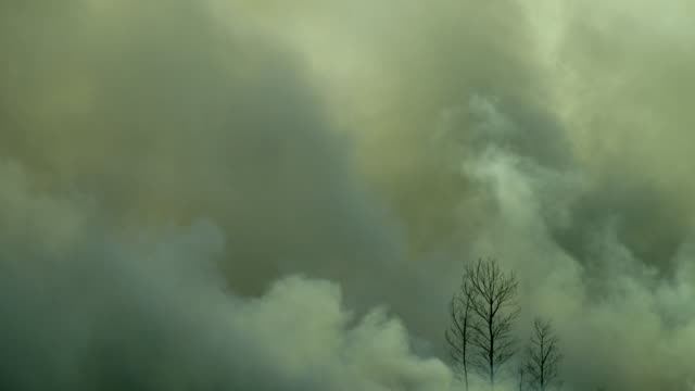 Dark smoke from the forest fire, Sumatra, Indonesia