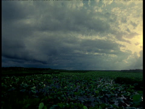 Dark stormy rain clouds form over field and rainfall sweeps towards camera