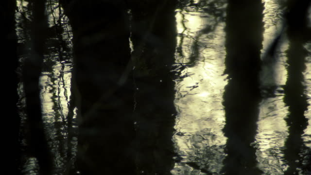 dark water in the forest - double refraction stock videos & royalty-free footage