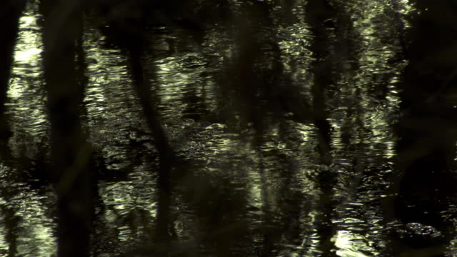 Dark water in the forest