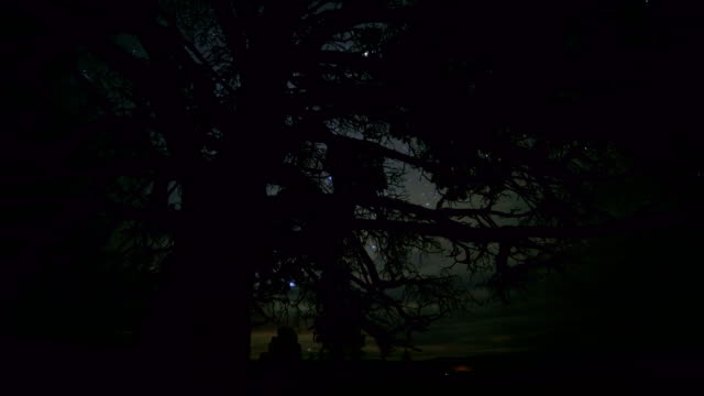 Dark western juniper silhouette stars and clouds at night starry skies