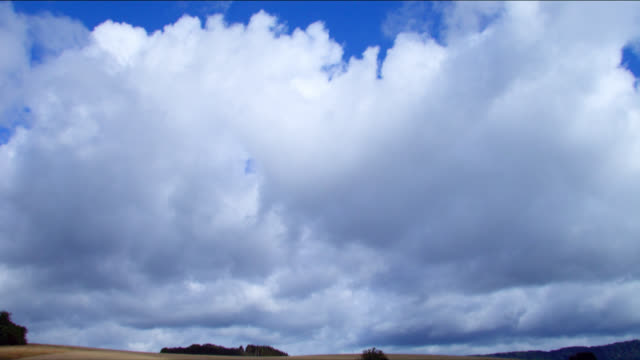A darkening blue sky looms over a rye field swaying in the wind.