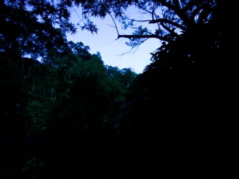 vídeos y material grabado en eventos de stock de t/l darkness falling over river, revealing firefly trails, japan - escarabajo de cuerno largo