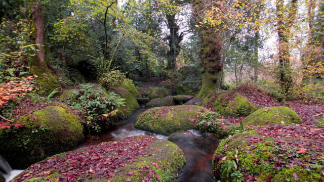 Dartmoor Forest in Autumn