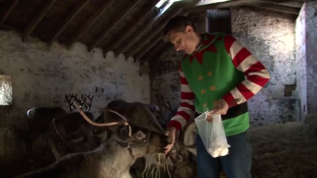 dasha the reindeer has recovered from a bad ankle injury in time for christmas. he was written off by many vets and his owners struggled to find... - physiotherapy stock videos & royalty-free footage