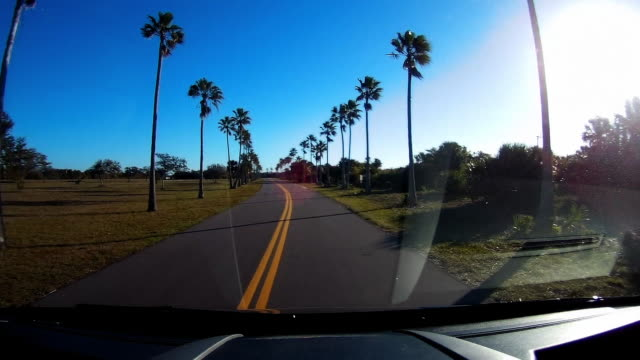 dashboard camera point of view of driving on a road lined up with palm trees in florida - フロントガラス点の映像素材/bロール