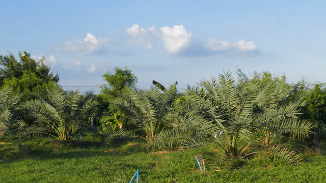 date palm tree - middle east stock videos & royalty-free footage