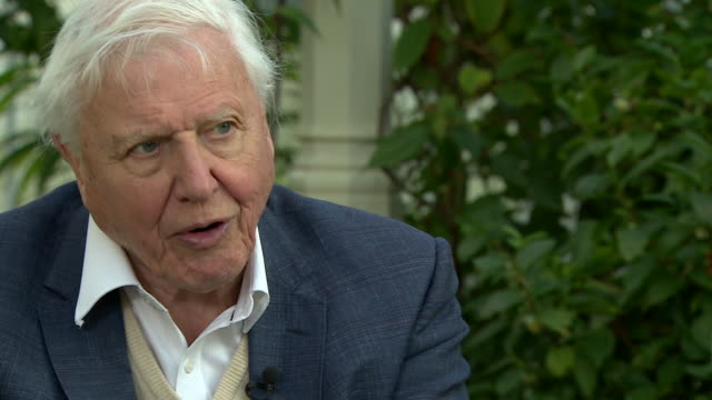 david attenborough saying people are now aware of the threat of plastic pollution - plastic stock videos & royalty-free footage