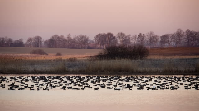 dawn at the polder - polder stock videos and b-roll footage