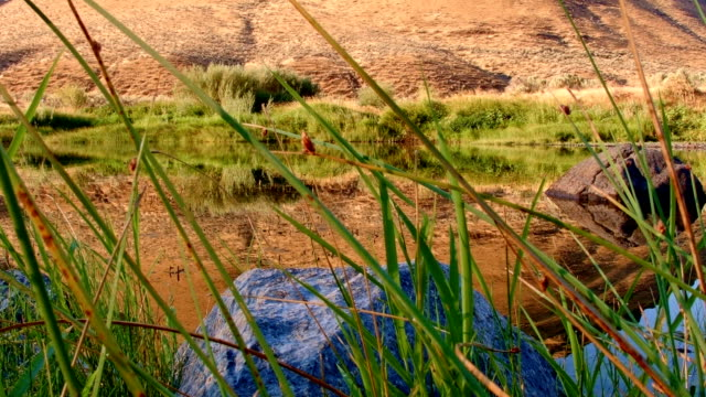 vídeos de stock, filmes e b-roll de dawn desert hill reflection john day river cottonwood canyon oregon 38 - cottonwood canyon