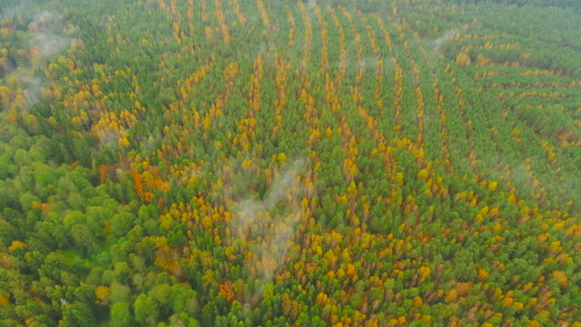 Dawn in autumn. Aerial View. Flying over forest trees