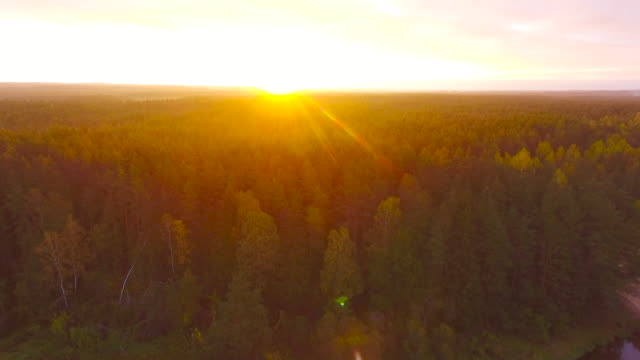 dawn in autumn. aerial view. flying over the forest trees and river. - formal garden stock videos & royalty-free footage