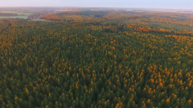 Dawn in autumn. Aerial View. Flying over the forest trees and river.