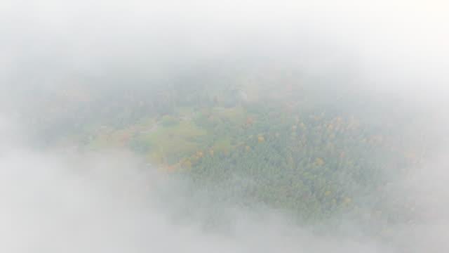 Gryning i höst. Flygfoto. Flygande över skogsträd och floden