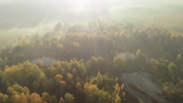 朝の夜明け。空中ドローンを撃った。 - 木立点の映像素材/bロール