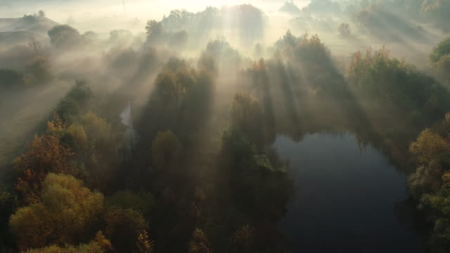 dawn in the morning. aerial drone shot. - woodland stock videos & royalty-free footage