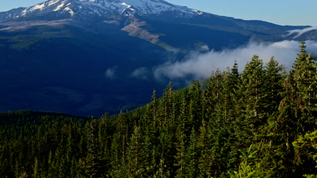 Dawn mist and fog in a blue sky forest Mt. Hood in summer from lost lake butte 1