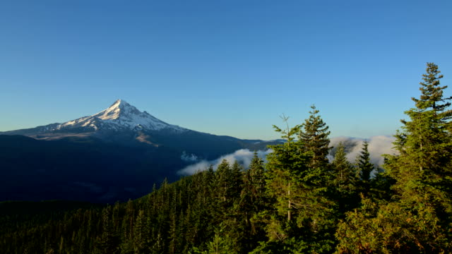 Dawn mist and fog in a blue sky forest Mt. Hood in summer from lost lake butte 2