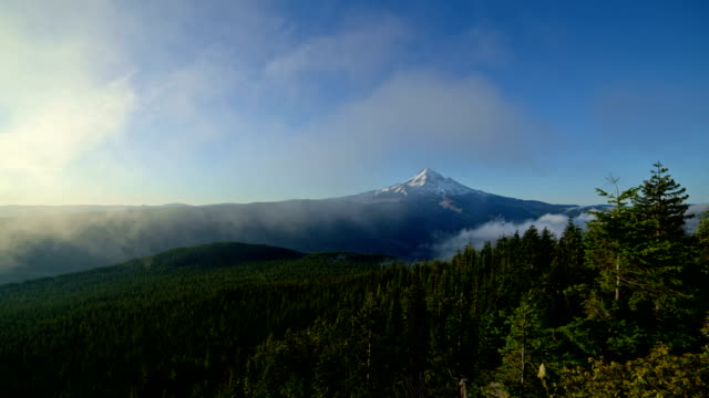 Dawn mist and fog in a blue sky forest Mt. Hood in summer from lost lake butte wide