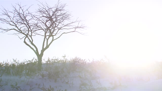 dawn on the winter solstice - solstice stock videos & royalty-free footage