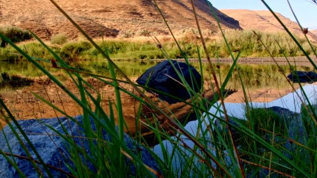 vídeos de stock, filmes e b-roll de dawn reflection pan grass john day river cottonwood canyon oregon 08 - cottonwood canyon