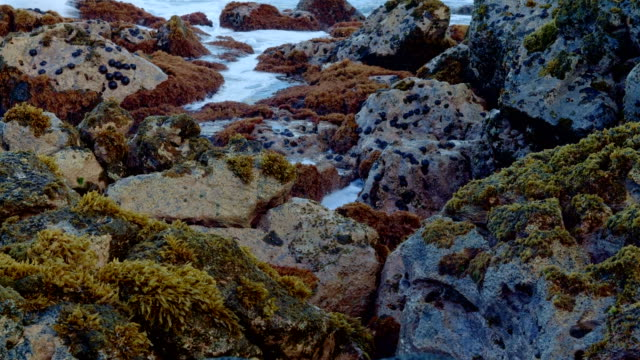 Dawn Waves Tidepool Forming Seaweed Kauai Hawaii