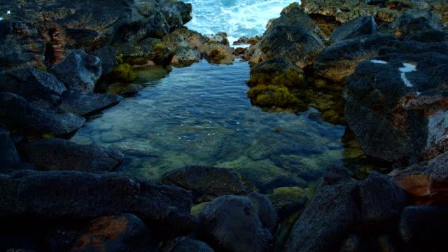 dawn waves tidepool kauai hawaii - tide pool stock videos and b-roll footage
