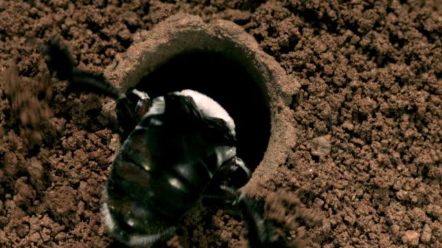 slomo dawson's bee digs nest tunnel, western australia - animal nest stock videos & royalty-free footage