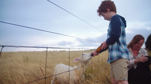 A day in the life of a farming family: kid feeding lamb