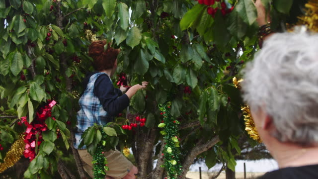 A day in the life of a farming family: kid picking cherries