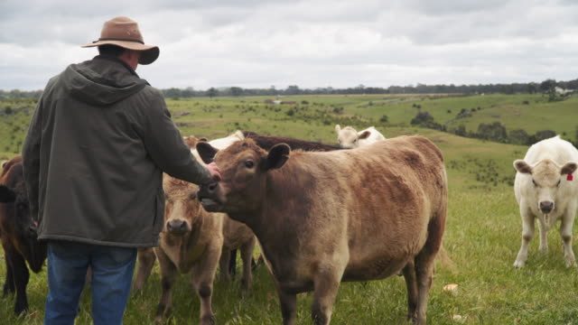 A day in the life of a farming family: the farmer and the cows