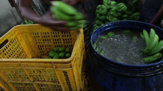 day laborers wash banana hands in water sanitized with alum before loading them into crates, a day laborer arranges crates of banana hands on a... - banana stock videos & royalty-free footage